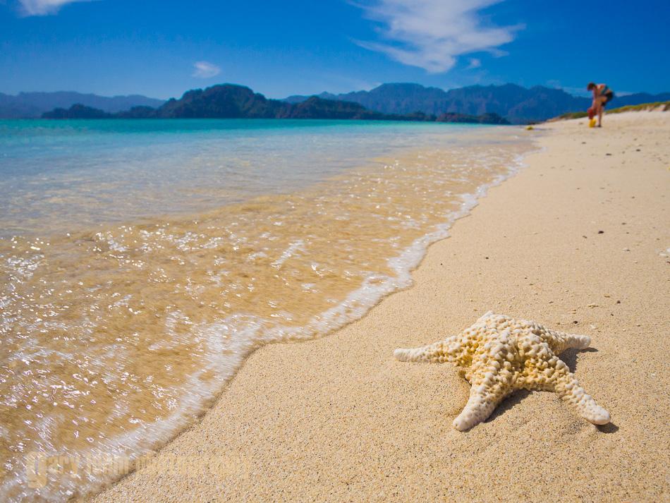 Sea star skeleton on white sand beach of Isla Carmen, Sea of Cortez, Baja, Mexico.