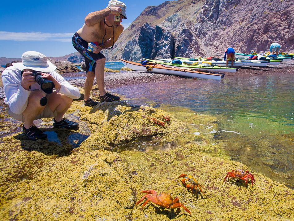 Kayaks, Sally Lightfoot Crab, Isla Carmen, Baja