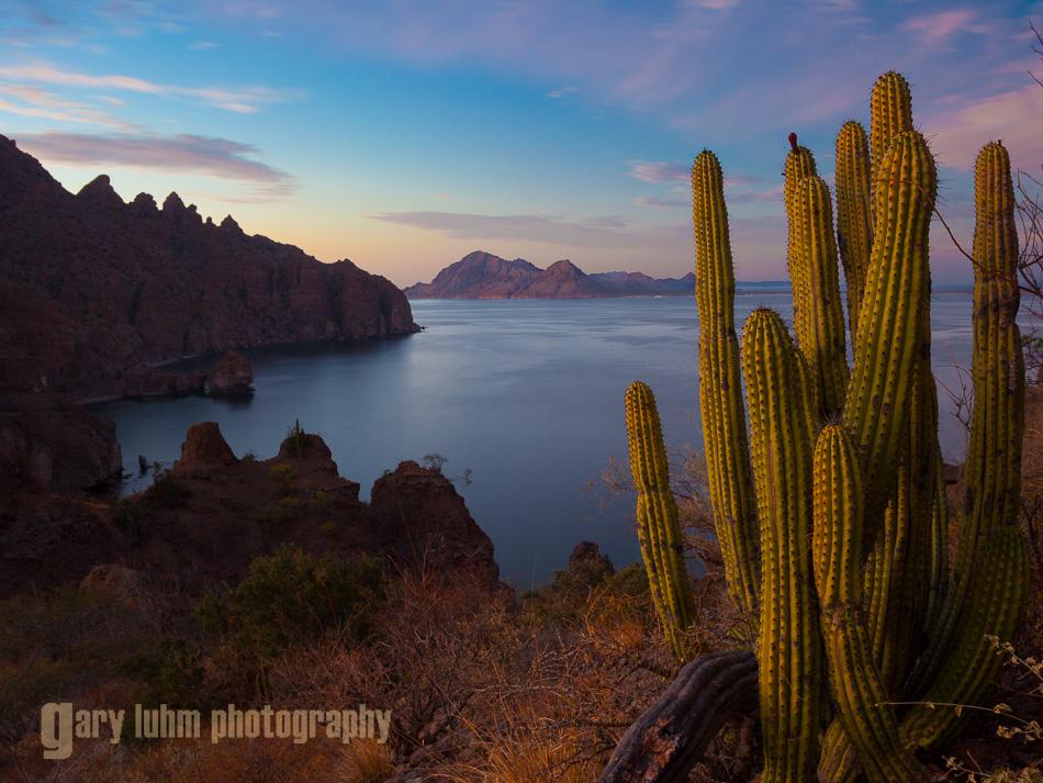 Organ Pipe Cactus and Isla Danzante at sunset, Sea of Cortez, Baja, Mexico.