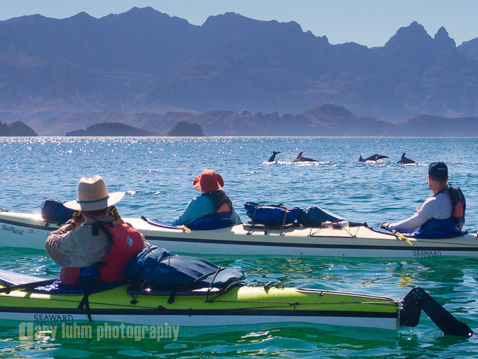 Bottlenose dolphin off the Isla Carmen shore, Sea of Cortez, Baja, Mexico.