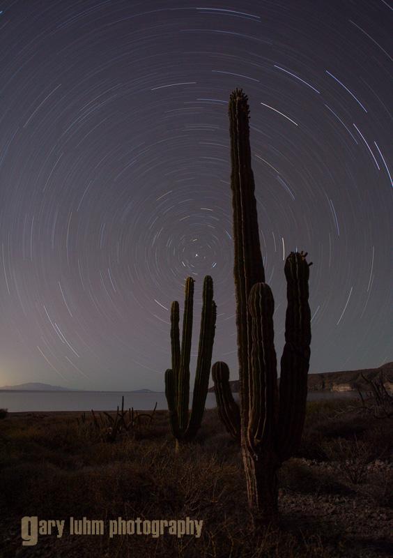 Star trails and Cardon Cactus, Isla Carmen, Baja, Mexico.