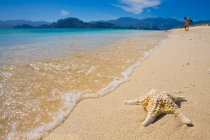 Sea star skeleton on white sand beach of Isla Carmen, Sea of Cortez, Baja, Mexico.