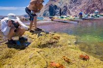 Kayaks, Sally Lightfoot Crab, Isla Carmen, Baja