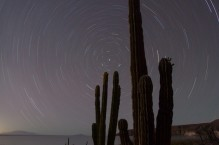 Star trails and Cardon Cactus, Isla Carmen, Baja, Mexico.