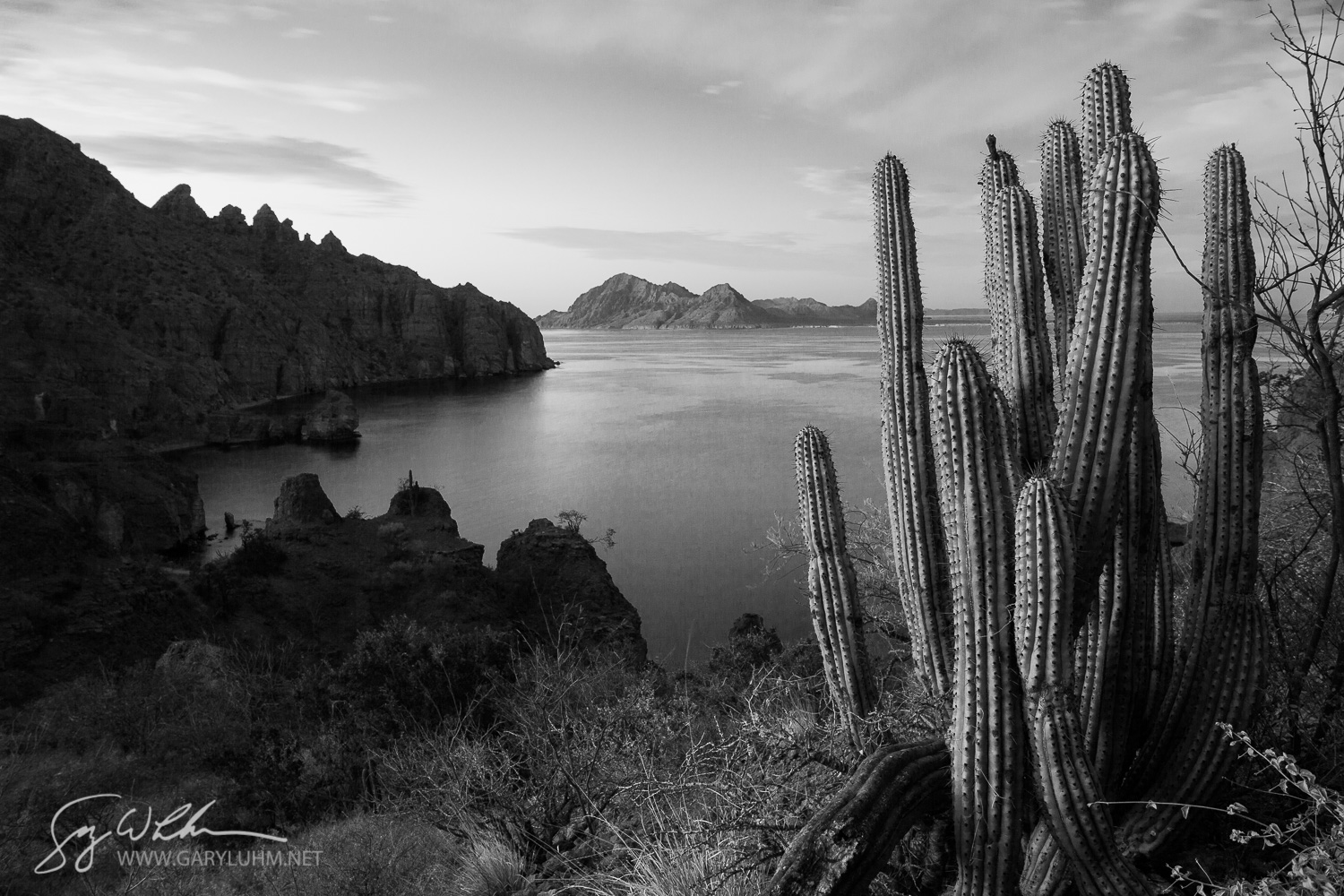 Organ Pipe Cactus and Isla Danzante at sunset, Sea of Cortez, Baja, Mexico.