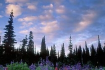 Lousewort, Lupine, Paintbrush. Indian Henry\'s Hunting Ground. Mt. Rainier NP. Canon ElanIIe. 24mm T/S. 3 stop ND filter.