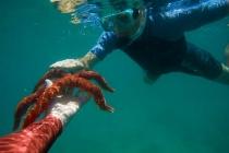 Examining a Sea Star, Puerto Ballandra