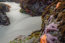 Ochre Sea Stars in intertidal, and a look through an archway. Point of Arches, Olympic National Park.