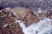 Surfbirds. Surfbird flock dodges waves near Naked Island, Prince William Sound, AK.