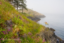 Wildflowers, sea kayaker and camp, Strawberry Island, San Juan Islands, Washington State. (MR).