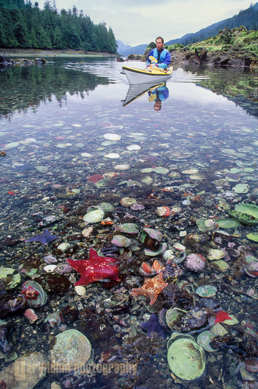 Kayaker and intertidal life, Queen Charlotte Islands, British Columbia, Canada.