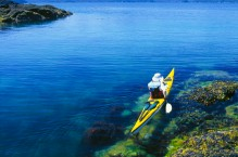 Kayaker and intertidal rockweed, on Juan Perez Sound. Queen Charlotte Islands, British Columbia, Canada. (MR).