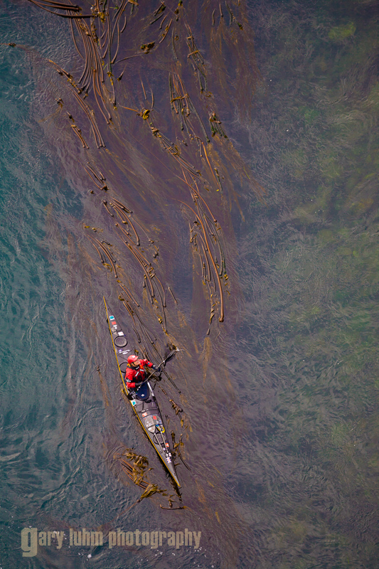 Aerial view of sea kayaker Shawna Franklin in kelp bed, tidal current. Deception Pass, Washington State, USA. (MR).