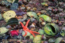Rich intertidal life, Barnaby Narrows, Queen Charlotte Islands, British Columbia, Canada.