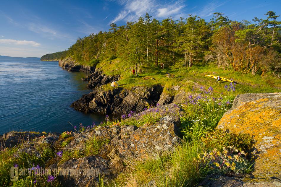 Flowers and kayak camp, Strawberry Island., San Juan Islands, Washington State(MR).