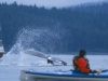 Humpback Whale Tail. Paddling alongside a Humpback Whale in Icy Strait, AK.