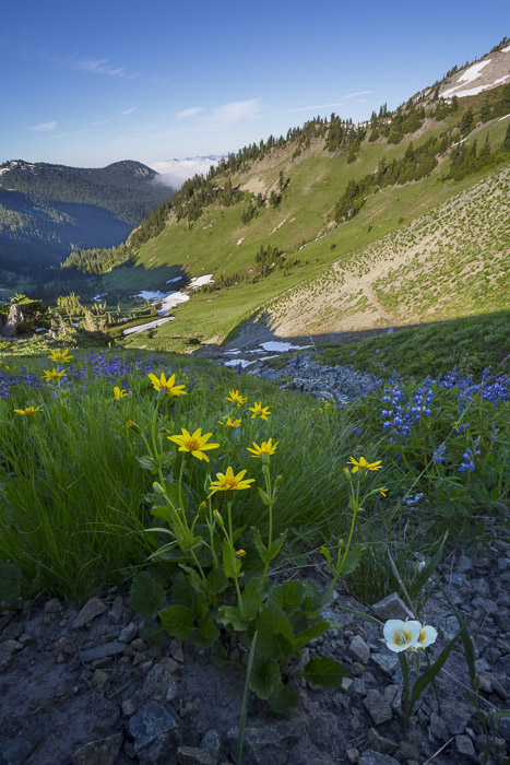 Cat's Ear, Arnica and Lupine. Cispus Basin, Goat Rocks Wilderness, Washington State Canon 5D III, 17-40mm f/4 @17mm, f/11, 1/320sec, iso200.