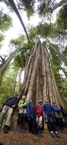 Sea Kayak Adventure clients at 1,000 year old cedar on Hansen Island.