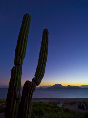 Jupiter and Venus, Cardon Cactus and a Baja sunset