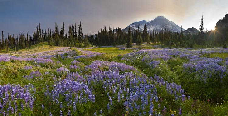 Indian Henry's at Mt. Rainier, Canon 5D II, 24mm T/S, f/10, ISO50