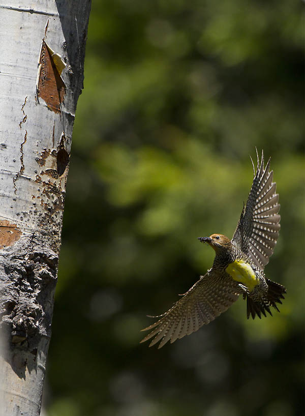 Vertical image created by adding another (upper) background image.The whole image was then flattened, and the trunk was selected with a two pixel feather and copied to a second layer. The layer containing the bird and background were then simply moved  toward the hole.