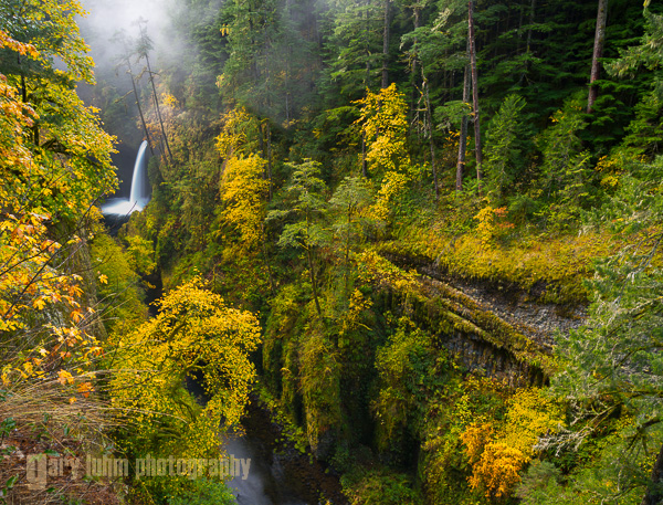 A polarizing filter enhances color saturation by   cutting the glare off wet vegetation. Metlako Falls, Eagle Creek, Columbia River Gorge, Oregon. Canon 5D III, 24-105mm f/4L @24mm, f/11,   5sec, iso50.
