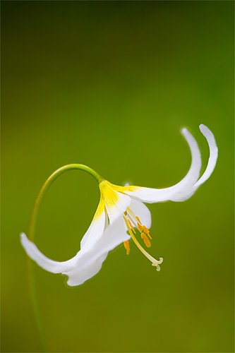 Avalanche Lily f/2.8 and f/8 images combined into one