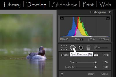 Lightroom 2 Develop module, showing Spot Removal tool location