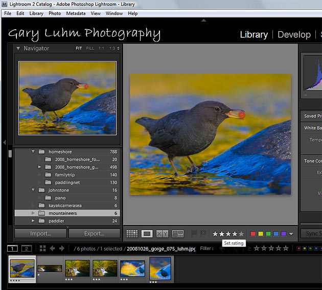 Fig. 1. Using lope view, an easy way to assign stars is to click on the stars in the toolbar below the photo (or use the keyboard numbers). I judged this American Dipper a 4-star photo.