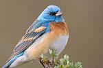 Bird Photography Audio Advantage  2014/06