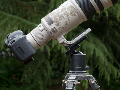 Canon 5D III, 500mm f/4 and 1. 4x. Lens shifted forward to balance on the tripod.