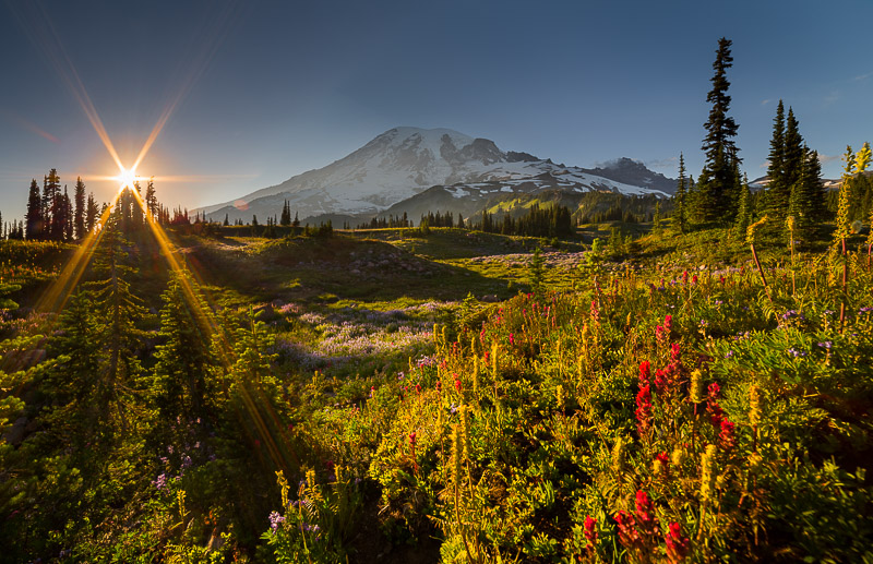 6-blade 14mm at f/22, enhanced by shooting through the treetop. Mt. Rainier National Park.